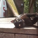 Ms. Kitty Purreee enjoying the sun deck