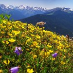 The tippy top of Blue Mountain. JUne-August flowers, 60 min from Lodge to top
