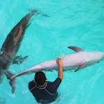 dolphins with the handlers