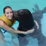 sea lion experience