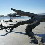 Driftwood beach and pier