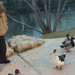 Dad and Ducks