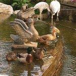 池塘的鴨子