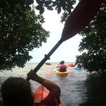 kayaking in the Florida mangroves