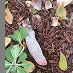 Knife in the flower bed