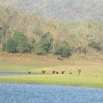 Periyar Tiger Reserve Animals