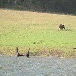 Wild Boar at Tiger Reserve