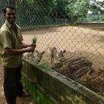 Tripunithura Zoo