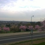 View of London from Alexandra Palace ~ Cherry Blossoms