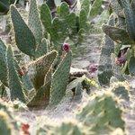 Cactus joy