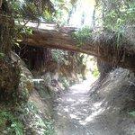 Redwoods Whakarewarewa Forest hike