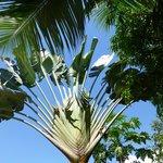 Tropische Planzen im Garten