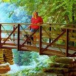 bridge over wolf creek