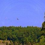 turkey buzzards over the canyon