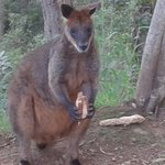 Skippy -- one of several regular visitors