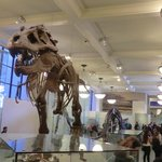 La estrella del muse: el tyranosaurio!!