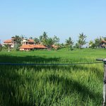 Rice fields view (back side of Nirwa)