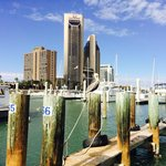 Corpus Christi Marina about 6 miles from the Staybridge Suites