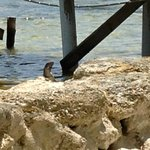 Lizards hung out along the water