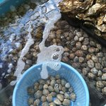 Live Bay Clams and Oysters in the Market