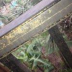 Dreck Fliegengitter Balkon