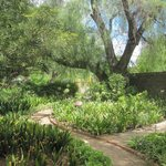 The beautiful garden