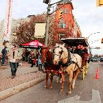 Horse-Drawn Guided Carriage Rides through Downtown Stratford
