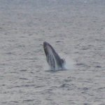 Whale from the balcony