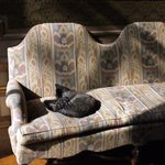 Кот смотрит советский мультфильм