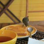 Adossée au JArdin Botanique, les oiseaux sont très nombreux