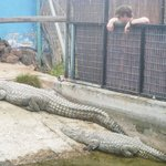Croc Enclosure