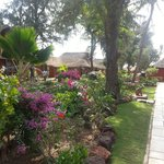 Baobab Look Flamboyant jardin