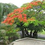Photo de Coral Tree Colony B&B