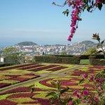 Carpet bedding and view, Jardim Botanico