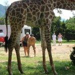 accueil par girafon