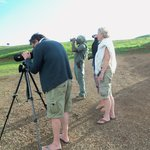 Shrike Safaris - Day Tours