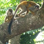Monkeys @ Costa Verde!!