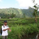promenade dans les rizières