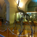 Museo di Storia Naturale dell'Università di Firenze, una sala
