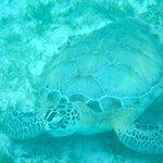 Turtle on a Honeymoon