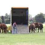 Polo Ponies before the match