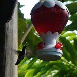 Hummingbird viewing area