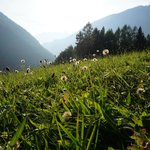 Meadows by Gasthof Sonnfeld