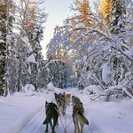 Dogsled Riding