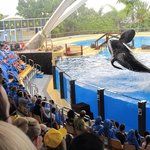 Whales in flight. Loro Parque.