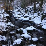 Lithia park creek