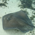 Friendly Sting Ray