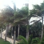 Very windy some days at Occidental, Cartagena, but they don't get hurricanes.