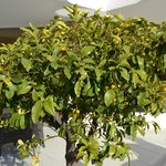 декоративное дерево на террасе
