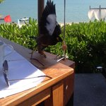 Friendly birds at breakfast! ��